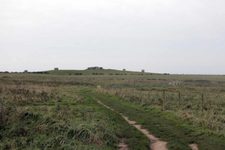 Flamborough & Bempton Field