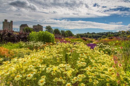 Helmsley Walled Garden Hot border in July 2